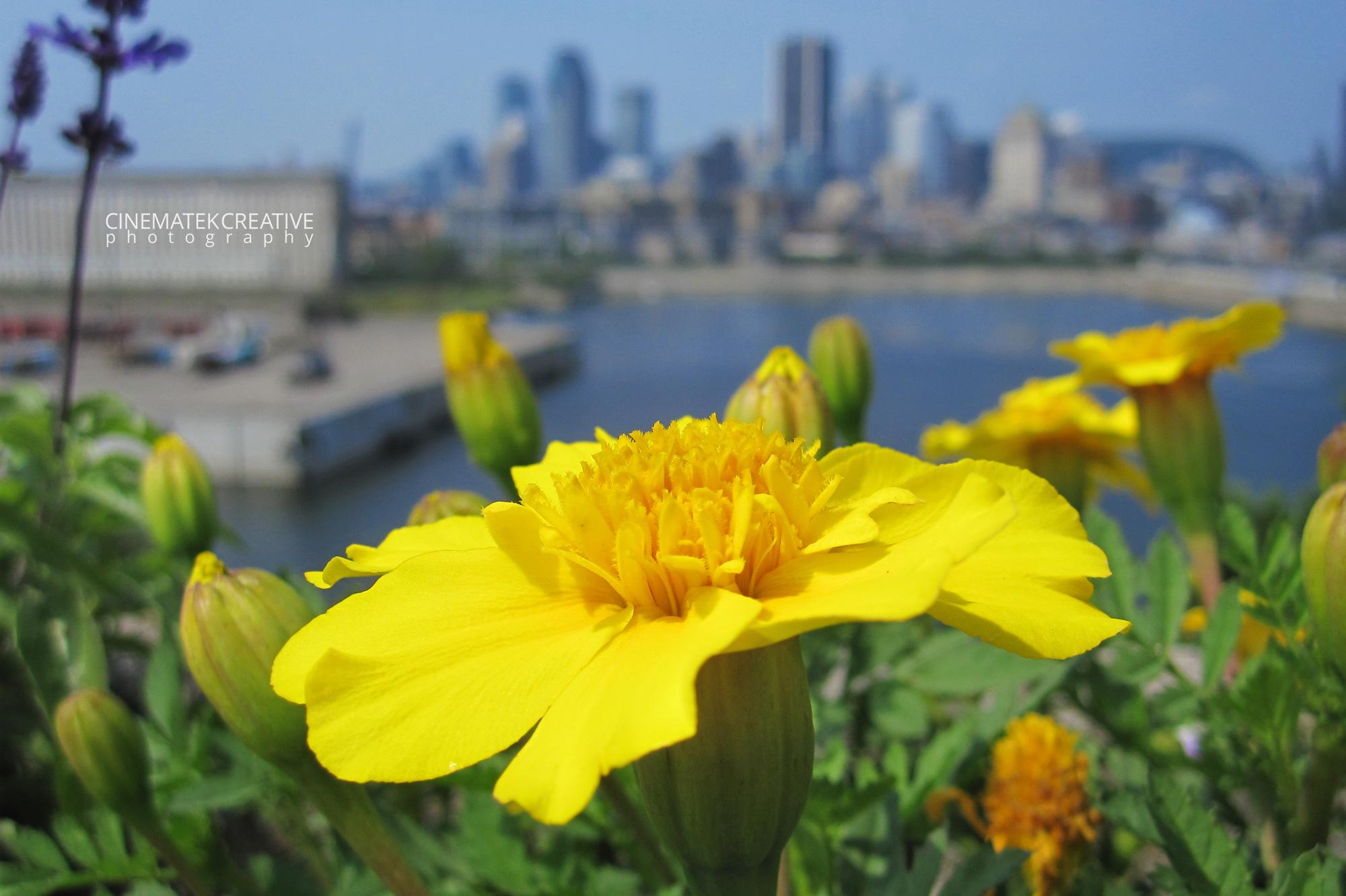 Flower Montreal